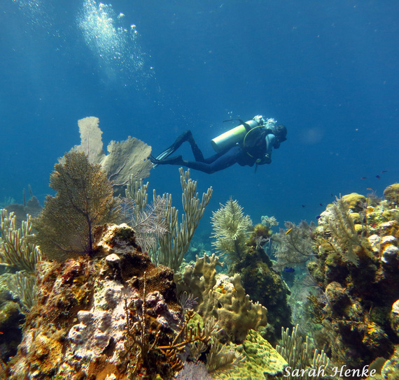 Sarah Henke Photography Roatan Bay Islands Ocean Connections Scuba Diving
