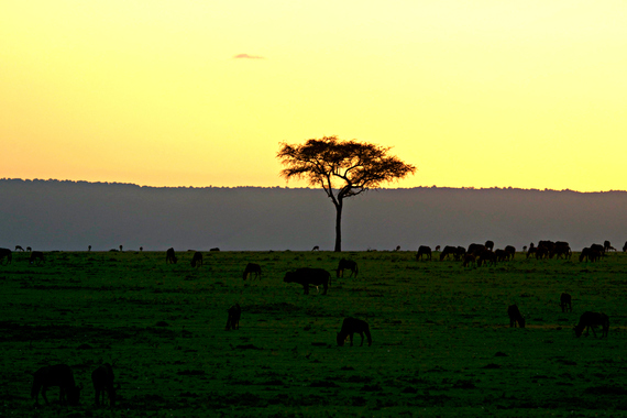 bucket list zuru kenya 5
