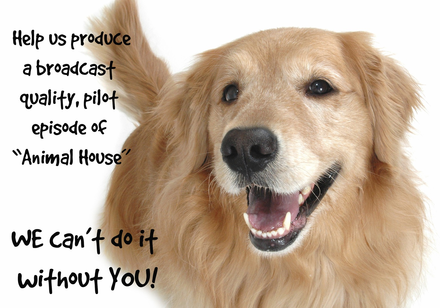 Animal House Helping People Help Animals