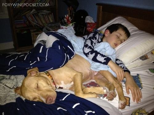 2014-10-27-dogsleepingwithboy.jpg