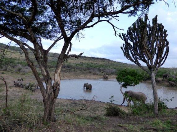2015-10-09-1444396524-5445522-savingthewild_thula_thula_elephant_utopia_1.jpg