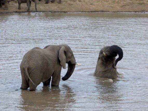 2015-10-09-1444396660-1982474-savingthewild_thula_thula_elephant_utopia_3.jpg