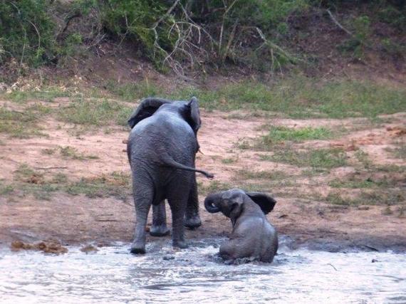 2015-10-09-1444396726-5538077-savingthewild_thula_thula_elephant_utopia_6.jpg