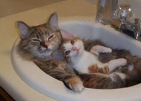 Grumpy Cat Jokes Images Grumpy Cat