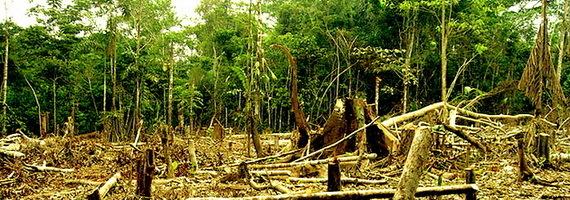 2016-01-29-1454108283-2916535-amazonloggingclearcuttingdeforestationTDCccr205.jpg