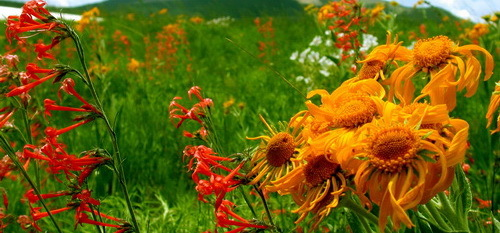 2016-02-23-1456257753-2429273-wildflowersDSCN0190aaflowercropped.jpg