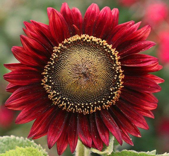 2016-11-13-1479040825-8745035-Flower.jpg