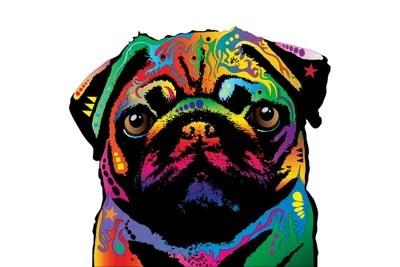 Rainbow Pug On White Canvas Wall Art By Michael Tompsett