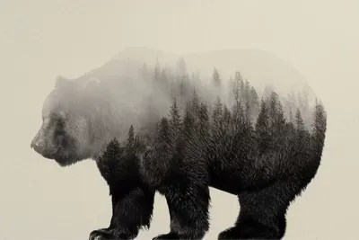 Bear In The Mist Canvas Artwork By Andreas Lie ICanvas