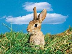 好兔不吃窩邊草
