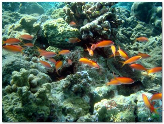 帛琉大斷層-熱帶魚與珊瑚礁