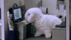 cute bunnies in office FUNNY