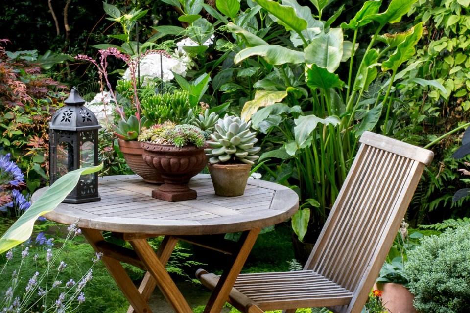 top plants for patios in pictures