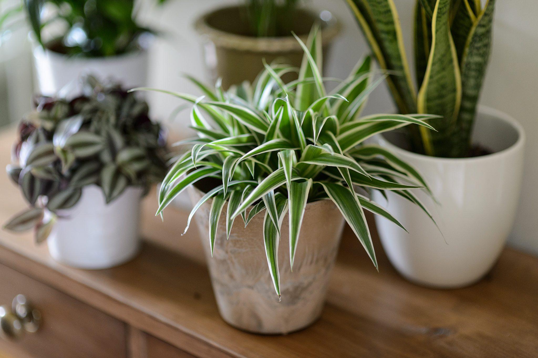 Easy House Plants To Grow Bbc Gardeners World Magazine