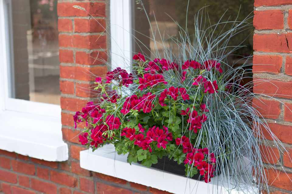 Plants For Window Boxes Pictures Bbc Gardeners World
