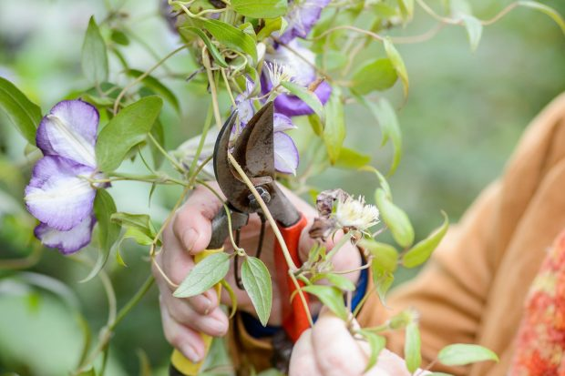 Beginner gardening tips - don't be afraid to prune