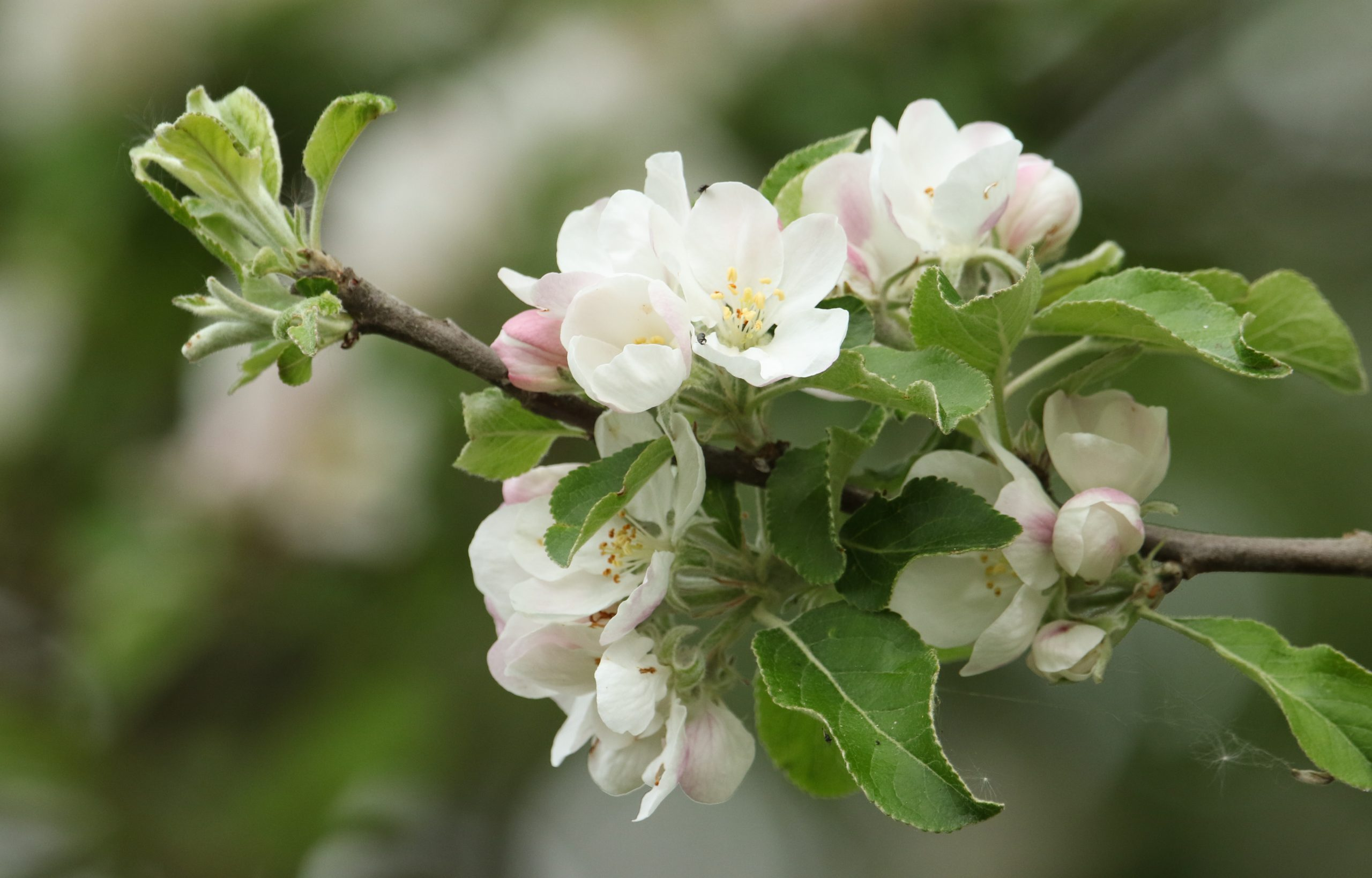 How To Identify Spring Blossom And Best Places To See Countryfile Com