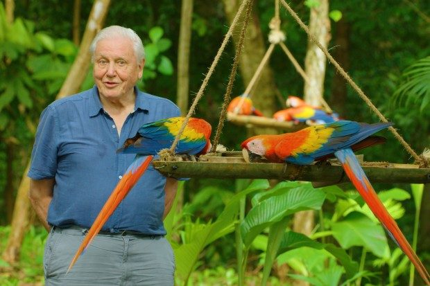 David Attenborough 's Life in Color release date |  Latest News