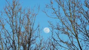 "Royal Astronomical Society seeks British ""Moon Trees"""