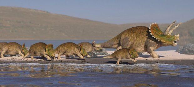 Triceratops झुंड के कलाकार की छाप