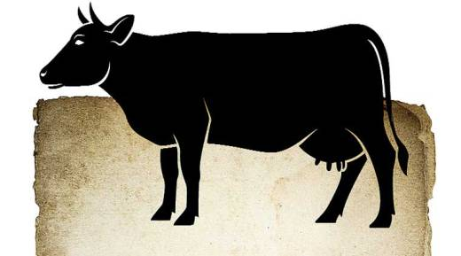 beef ban, beef ban issue, beef ban controversy, Hindu,  beef ban India, bjp beef ban, india news, nation news