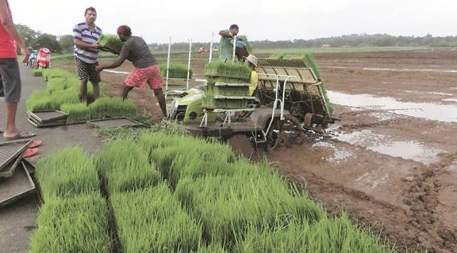 Wary of real estate boom, a Goa village pools land to revive farming after 30 years