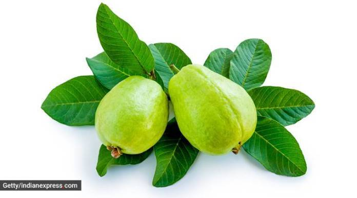 guava leaf, guava leaf tea, health benefits of guava leaf, health, immunity, indian express, indian express news
