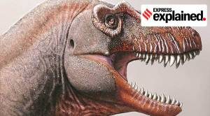 Explained: What new research tells us about Tyrannosaurus Rex