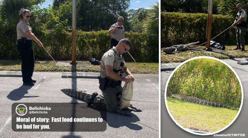 6-foot-long 'hangry' alligator chases people through Florida parking lot