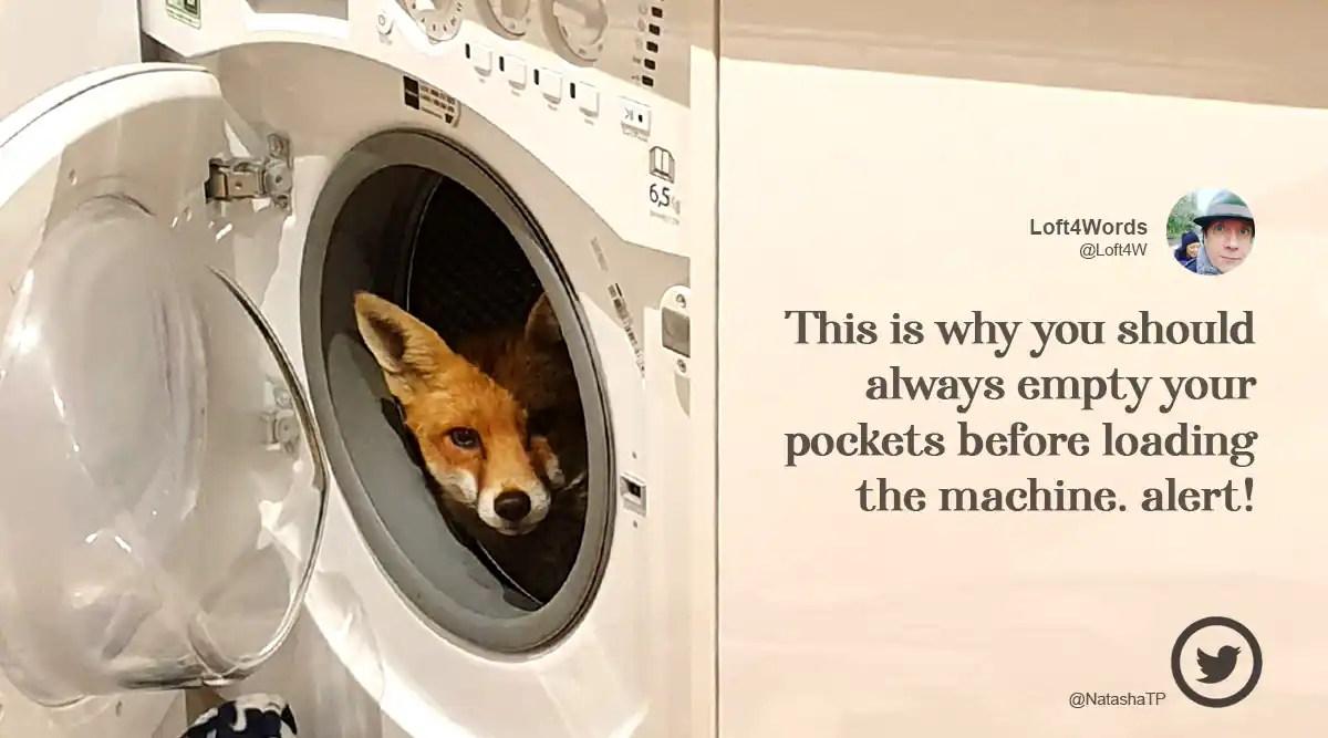 'What the actual fox!': UK woman finds fox inside washing machine