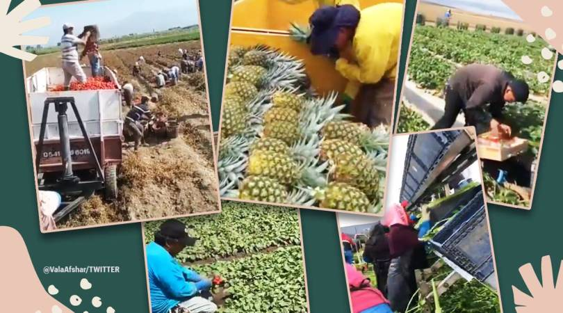 'These people are essential': Video of farmers working on the field with utmost precision leaves netizens impressed