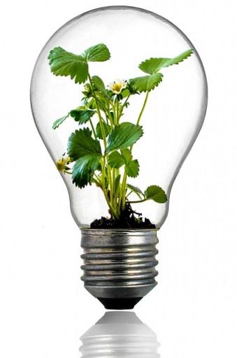 bulb-216975_640