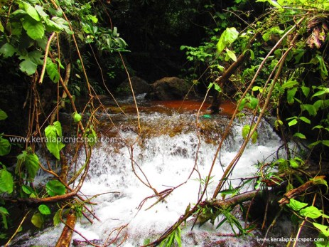 Kanayi Kanam flowing in between rocks and plants