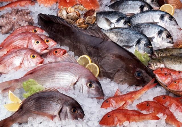 Risultati immagini per pesce