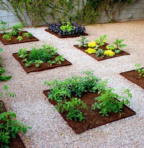 vege garden design