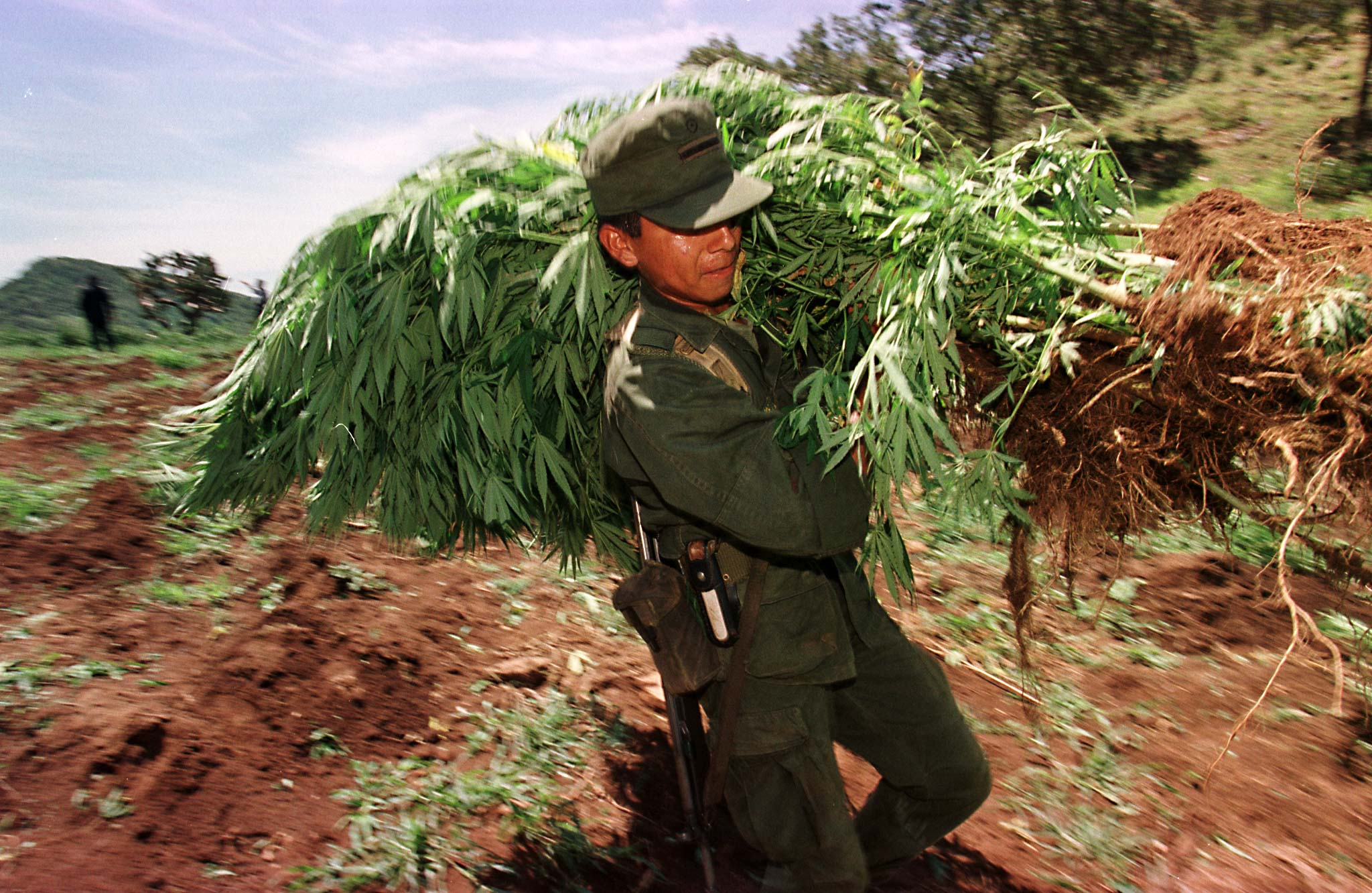 Mexico City Marijuana Legalization What Could New