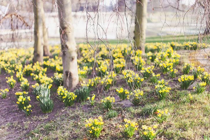 Parc floral de Vincennes-7