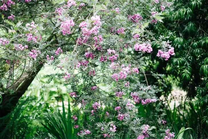 Botanical-garden00013