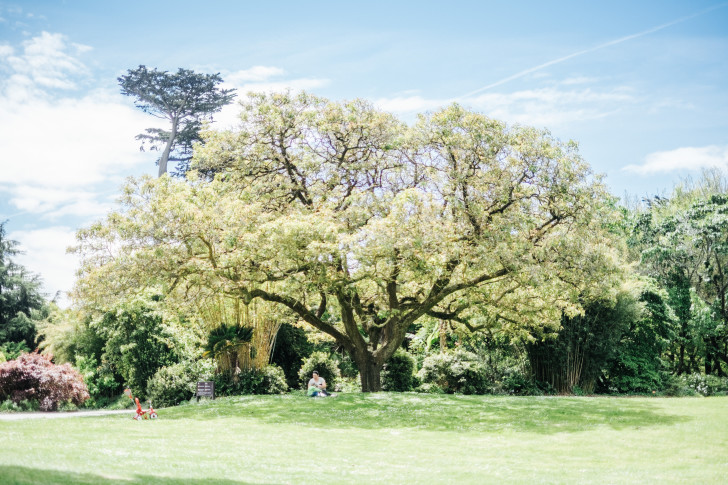 Botanical-garden00021