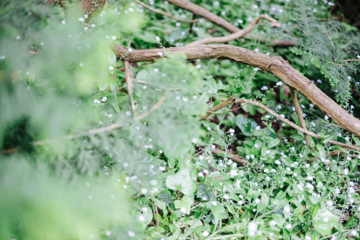 Botanical-garden00010