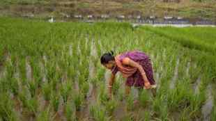 Food production could shrink in FY22 due to erratic rains