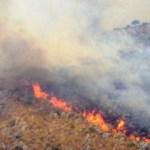 incendi palermo e provincia
