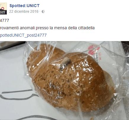 UNICT - Ancora insetti nei piatti della mensa [FOTO]