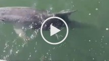 Video delfini porto Catania