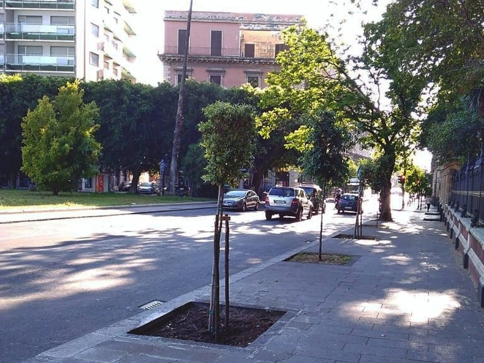 Alberi piantati a Catania