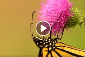 video giornata mondiale dell'ambiente