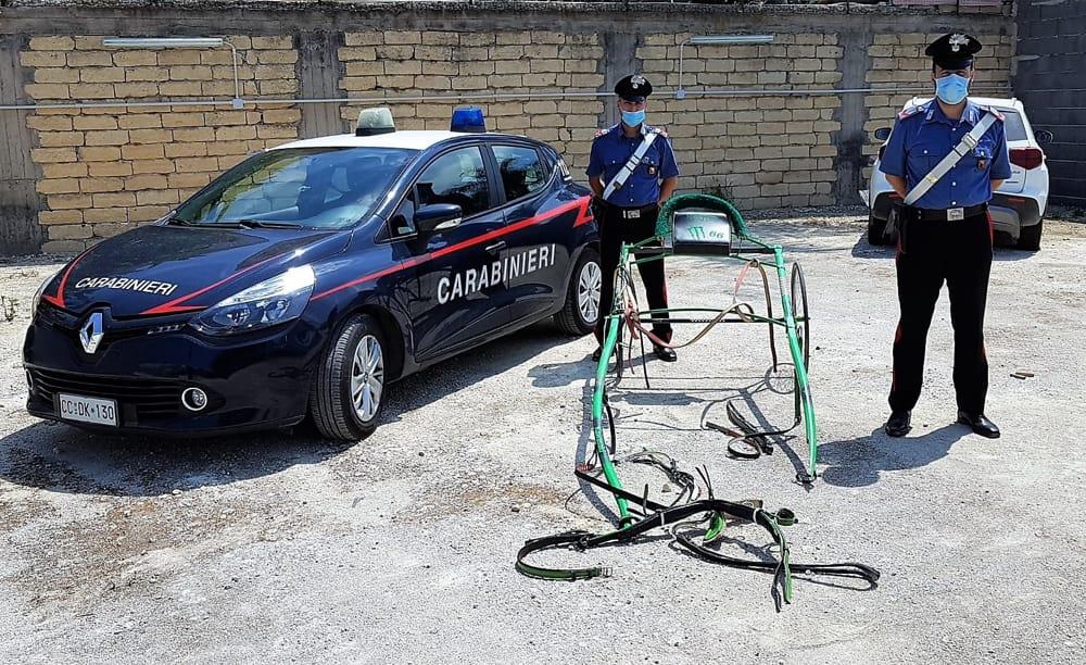 Corsa clandestina nel Catanese, cavallo cade e muore: 16 denunciati