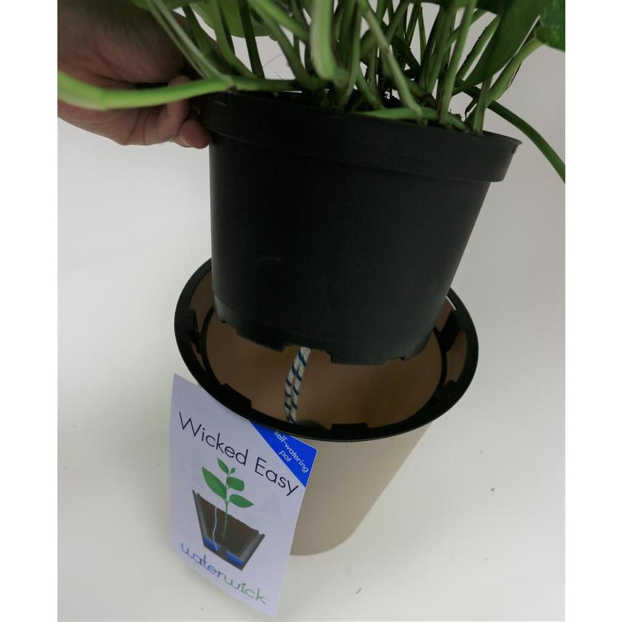 wick and grow pots lowes