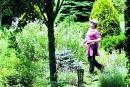Le jardin de Marie: les fruits d'un travail acharné