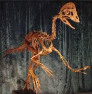 Des paléontologues américains sont parvenus à reconstituer une... (Photo AP) - image 1.0